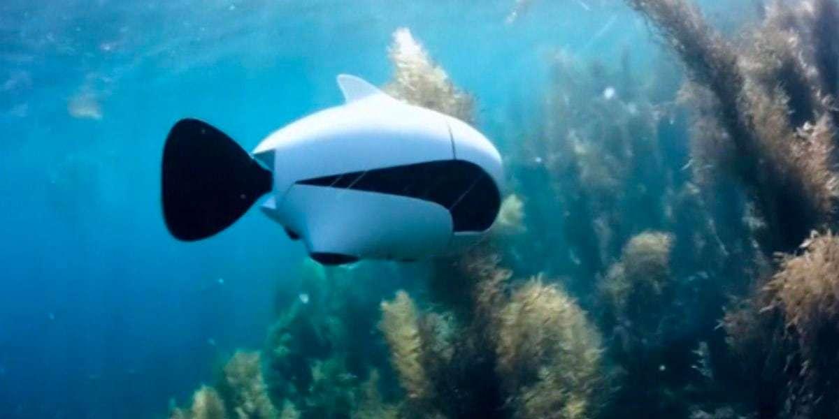 Подводный дрон RoboSea BIKI V1.0 белый в воде