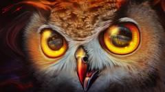 Картина раскраска по номерам 30x40 Мордочка совы