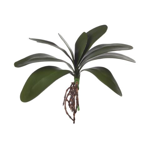 Листья фаленопсиса