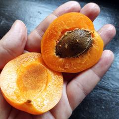 Нектакосы (абрикос + нектарин) свежие / 1 кг