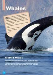 The Humpback Whale. Reader . Книга для чтения