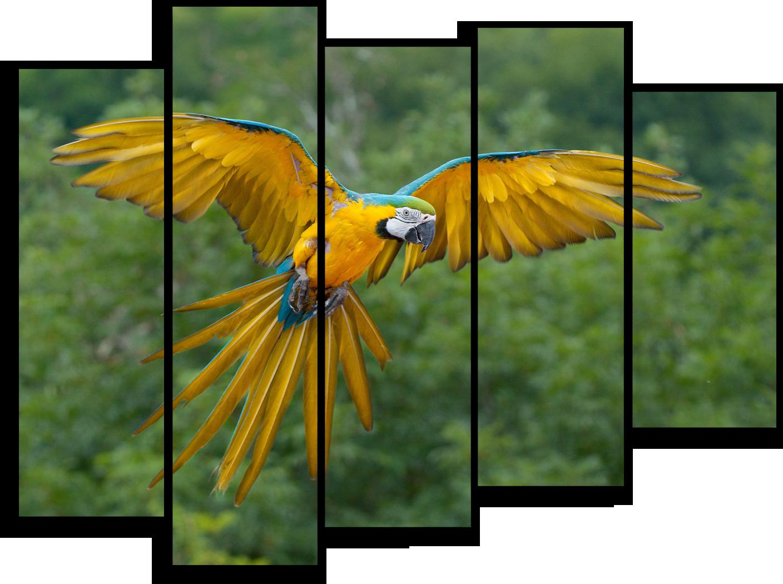 """Животные Модульная картина """"Попугай Ара"""" М367.png"""