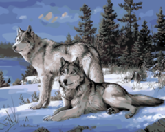 Картина раскраска по номерам 40x50 Два волка зимой