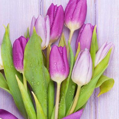 Тюльпаны лавандовые от 9шт