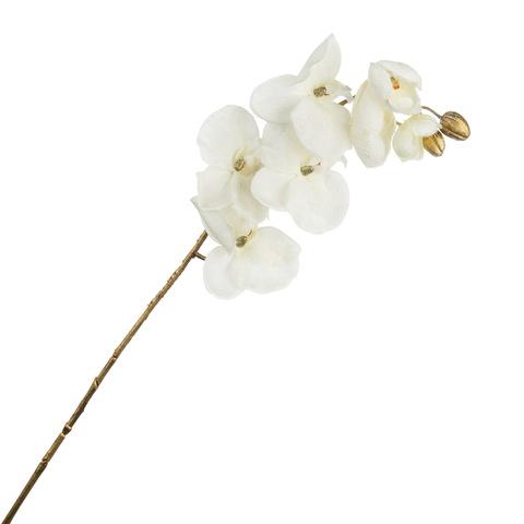 Фаленопсис белый  84см