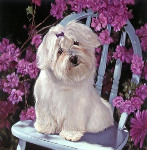 Картина раскраска по номерам 40x50 Белая собака на стуле