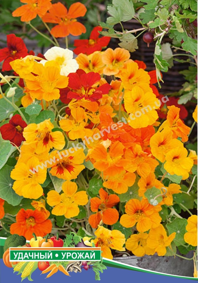 Семена настурции кустовой
