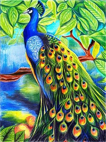 Картина раскраска по номерам 30x40 Павлин с раскинувшимся хвостом