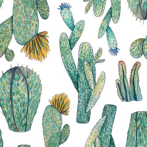 Бесшовный паттерн с суккулентами и кактусами, нарисованны от руки акварельными карандашами. Тропический цветочный узор на белом фоне