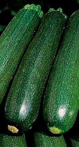 Семена Кабачок Цукеша