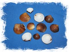 Ракушки морские для мозаики