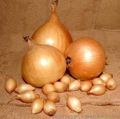 Стурон F1 семена лука репчатого (Hazera / Хазера)