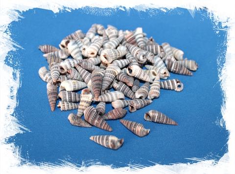 Церитиум сулката