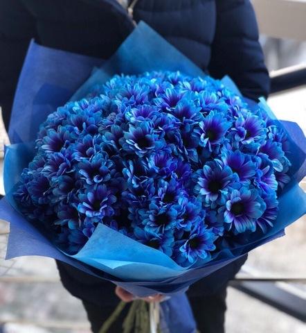 15 синих кустовых хризантем #28771