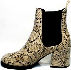 Ботильоны кожаные под змеиную кожу демисезонные Kluchini 13065 k465 Snake.