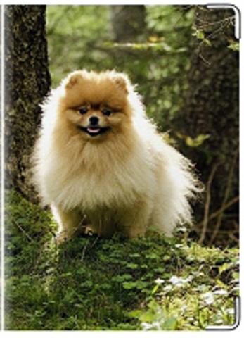 """Обложка для ветеринарного паспорта """"Шпиц"""""""