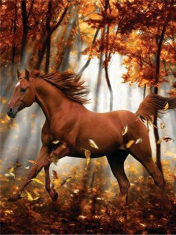 Алмазная Мозаика 5D 40x50 Коричневый конь в лесу