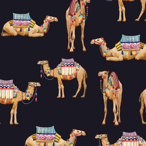 Верблюды ( темный фон)