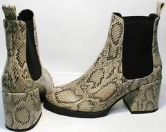 Ботинки челси на каблуке весна осень Kluchini 13065 k465 Snake.