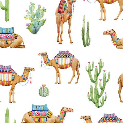 Верблюды и кактусы