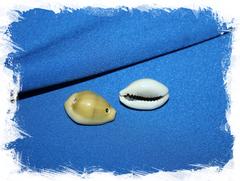 Ракушка Ципрея монета с двумя отверстиями