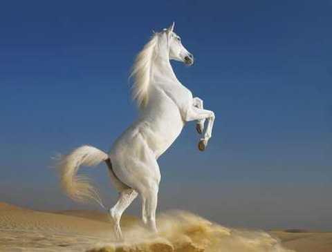 Алмазная Мозаика 5D 40x50 Белый конь стоит