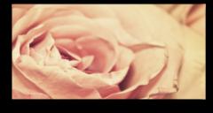 "Постер ""Бутон розы"""