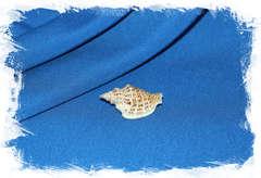 Изменчивый стромбус, Dolomena variabilis