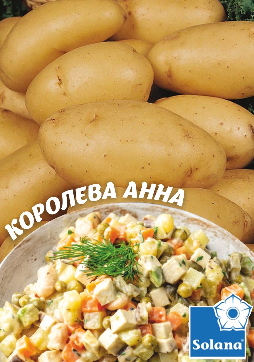 Семенной картофель   КОРОЛЕВА АННА   ТМ SOLANO  (Германия)  1 кг.