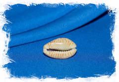 Ракушка Ципрея небритес, Naria nebrites
