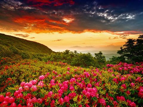Алмазная Мозаика 38х28 Закат над полем цветов (арт. K1664)