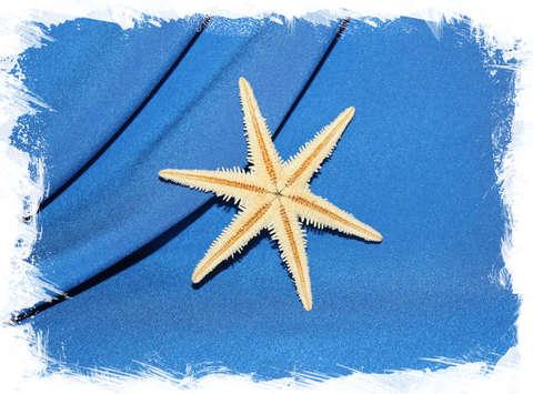Сахарная звезда 6 лучей 8 см.