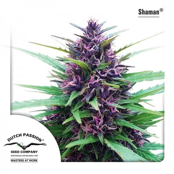 Сорт марихуаны шаман как выгнать марихуану из организма