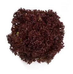 Революция семена салата лолло росса (Nunhems / Нюнемс)