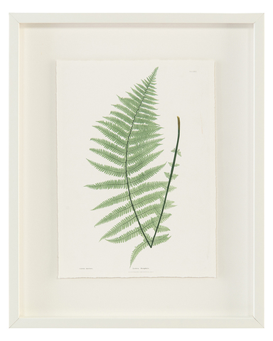 Antique Frond I