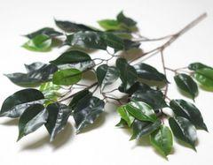 Листья фикуса на ветке 60 см.