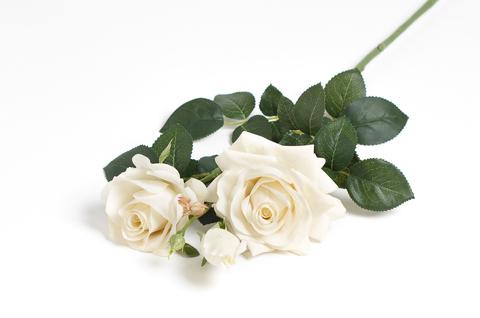 Ветка розы.