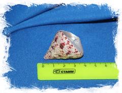 Морская ракушка Конический Трохус, Tectus conus