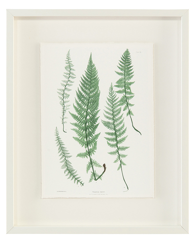 Antique Frond VI