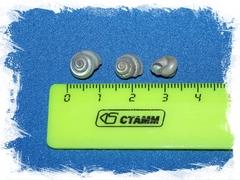 Умбониум перламутровый 0,5 - 1 см.