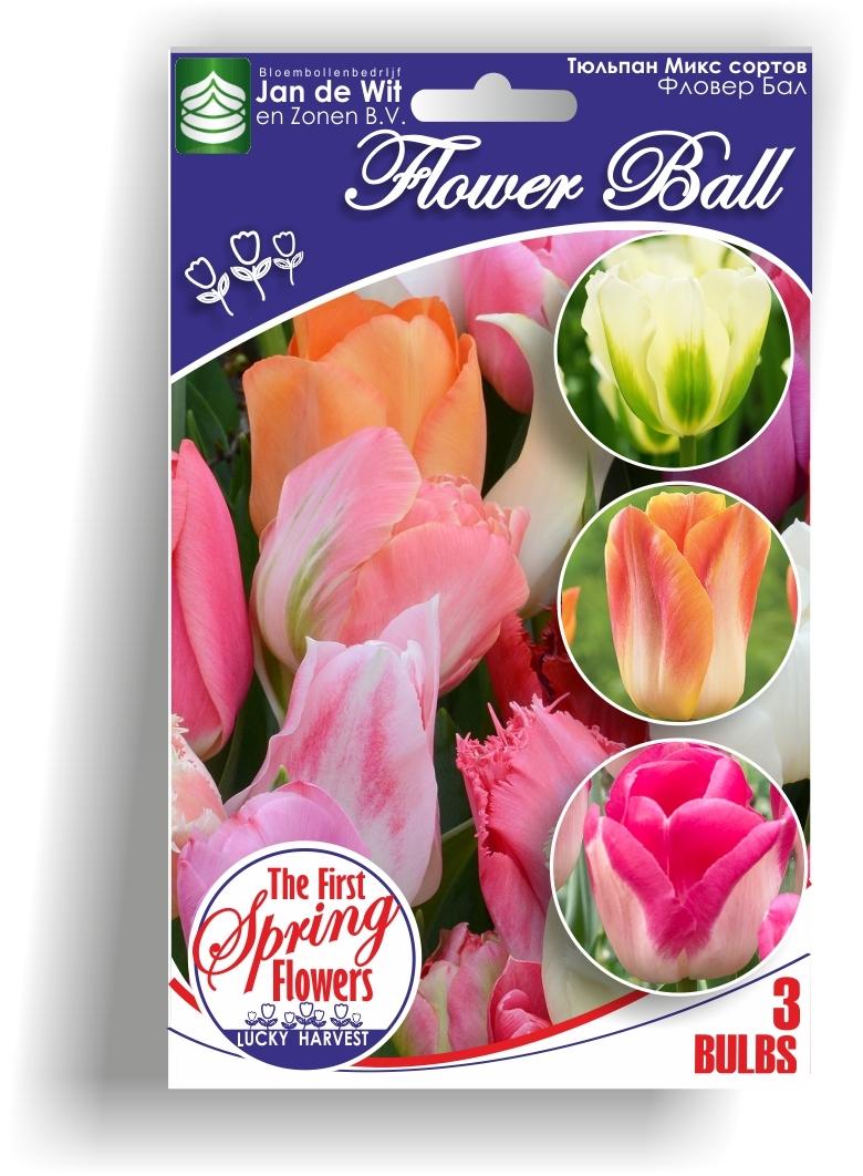 Тюльпан   Смесь Сортов  Flower Ball  ( Флавер Бал)  Jan de Wit en Zonen B.V. Нидерланды 3 шт.