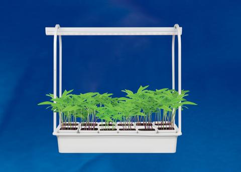Светильник для растений светодиодный ULI-P16-10W/SPLE IP20 WHITE 570мм с подставкой и 12 горшочками для рассады