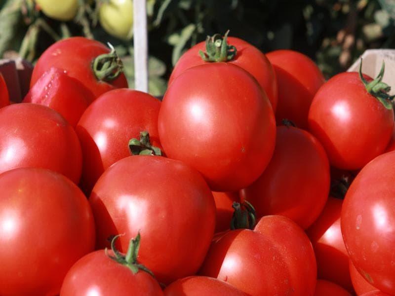 Nunhems Скиф F1 семена томата процессингового (Nunhems / Нюнемс) Скиф_F1-min.jpg