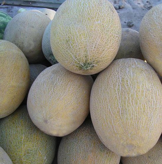 Дыня Амал F1 семена дыни (Clause / Клос) Амал_F1_семена_овощей_оптом.jpg