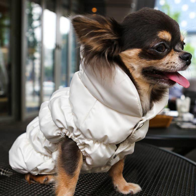 куртка для чихуахуа puppyangel
