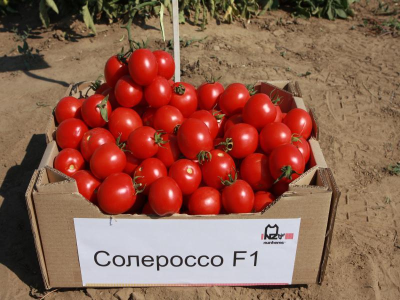Nunhems Солероссо F1 семена томата процессингового (Nunhems / Нюнемс) Солероссо_F1-min.jpg