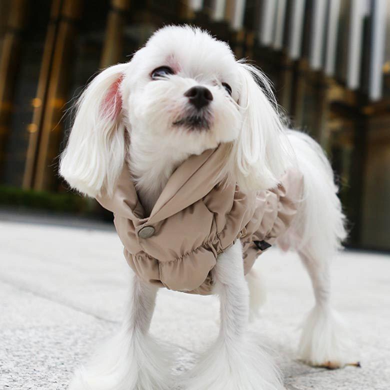 куртка для мальтезе puppyangel