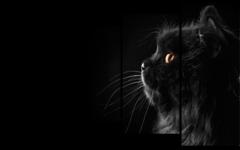 """Модульная картина """"Черный кот"""""""