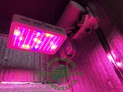 LED светильник Malaysia 150w Multi Spectrum