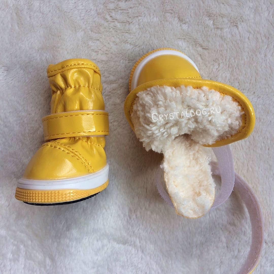 зимние ботинки для собак